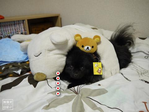 20120207_真熊の単身お泊りツアー6