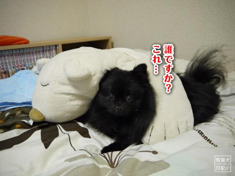 20120207_真熊の単身お泊りツアー4