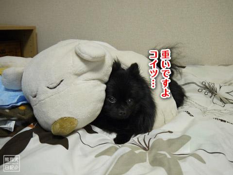 20120207_真熊の単身お泊りツアー5