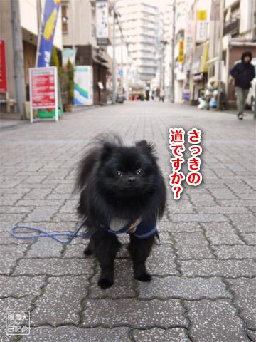 20120207_真熊の単身お泊りツアー7
