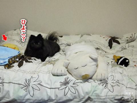 20120209_真熊の単身お泊りツアー6