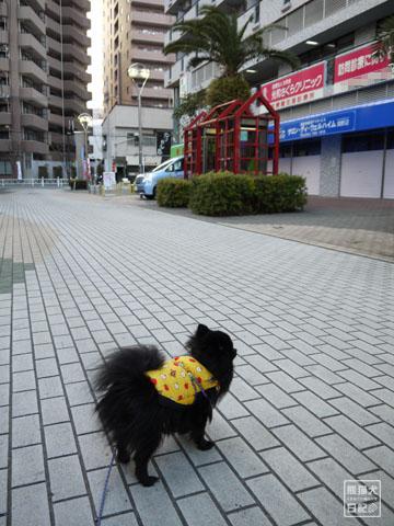 20120209_真熊の単身お泊りツアー8