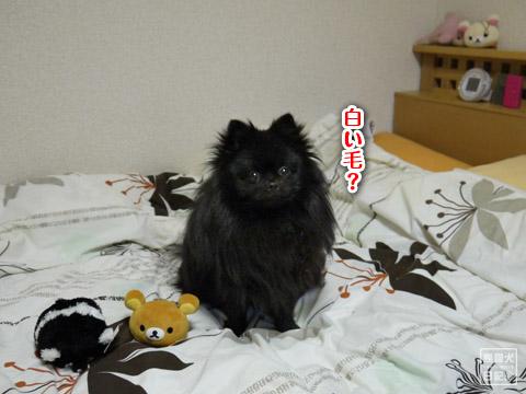 20120209_真熊の単身お泊りツアー7
