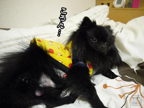 20120209_真熊の単身お泊りツアー13