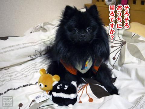 20120209_真熊の単身お泊りツアー20