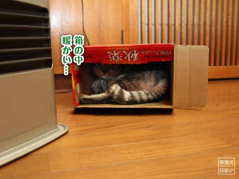 20120211_動物の眠り顔6