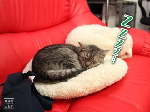 20120211_動物の眠り顔2
