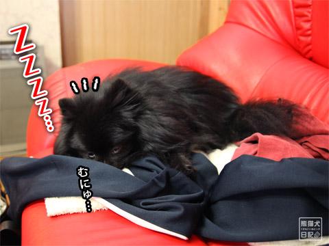 20120211_動物の眠り顔3