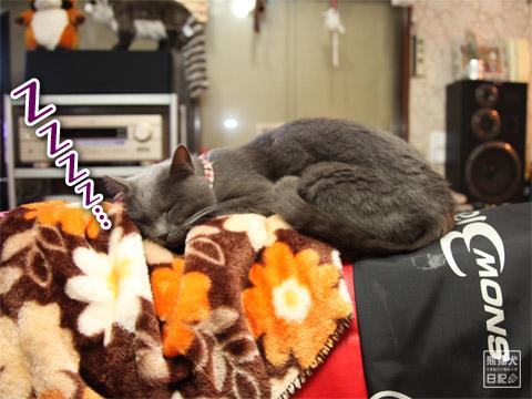 20120211_動物の眠り顔1