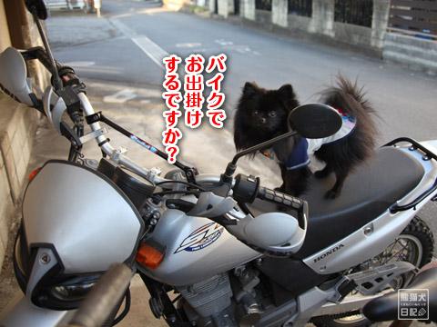 20120211_夕暮れ真熊6