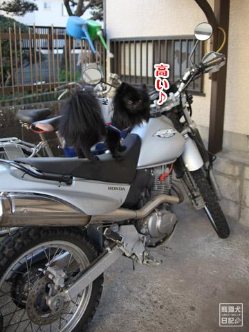 20120211_夕暮れ真熊4