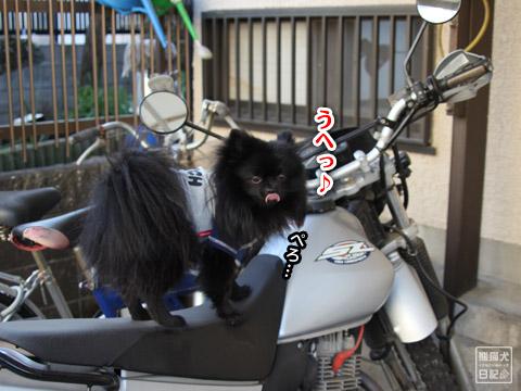 20120211_夕暮れ真熊5