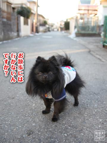 20120211_夕暮れ真熊2