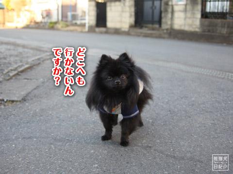 20120211_夕暮れ真熊7
