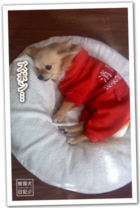 20120223_消防犬6