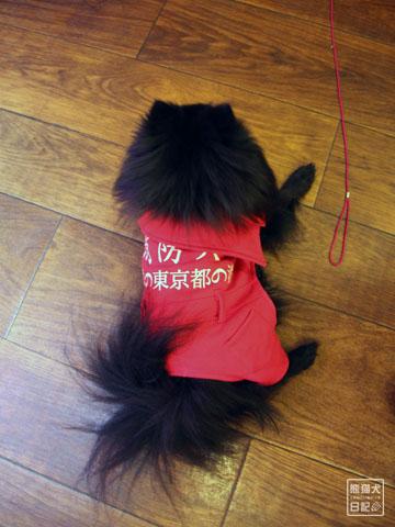 20120223_消防犬2
