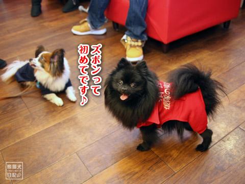 20120223_消防犬3