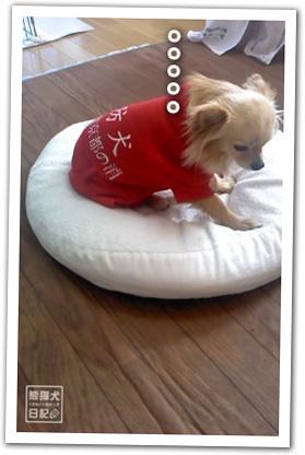 20120223_消防犬5
