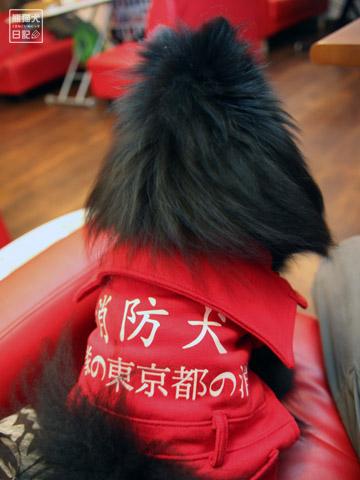 20120223_消防犬4