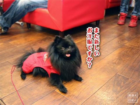 20120223_消防犬1
