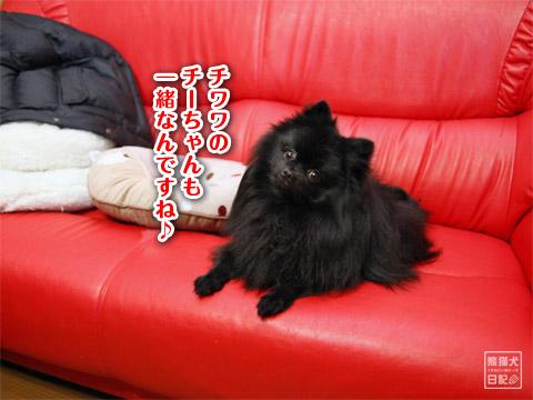 20120223_消防犬7