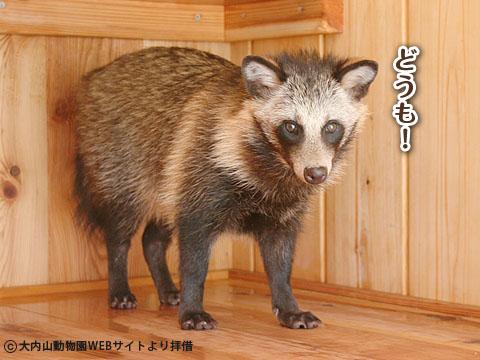 20120225_ちゃんちゃんこ4