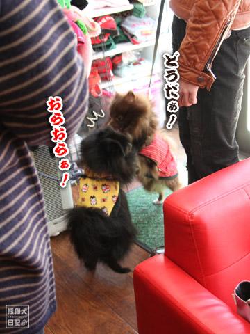 20120225_ちゃんちゃんこ9