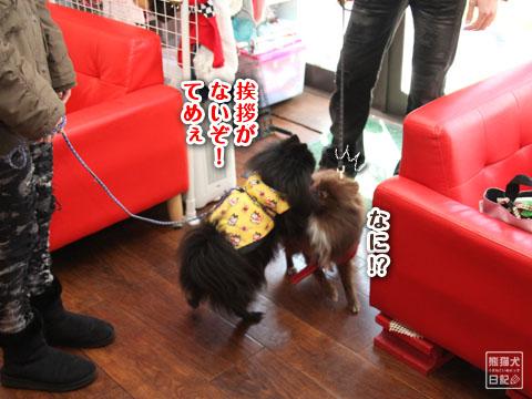 20120225_ちゃんちゃんこ7