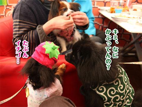 20120227_ちゃんちゃんこの会7