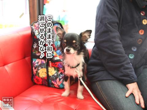 20120228_ちゃんちゃんこ5