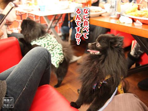 20120228_ちゃんちゃんこ6