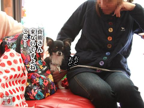 20120228_ちゃんちゃんこ4