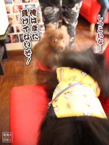 20120228_ちゃんちゃんこ10