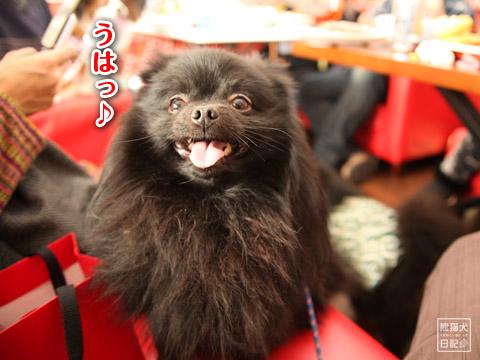 20120228_ちゃんちゃんこ8