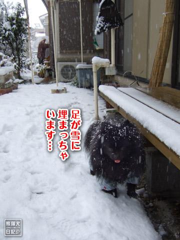 20120301_大雪4