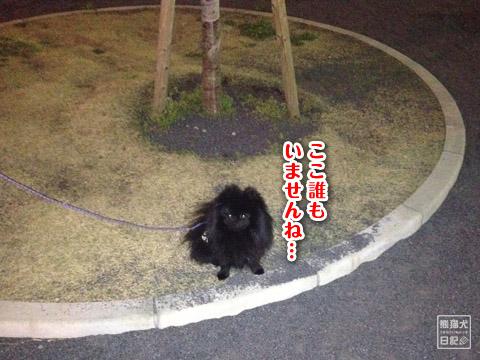 20120417_真熊の単身お泊りツアー2