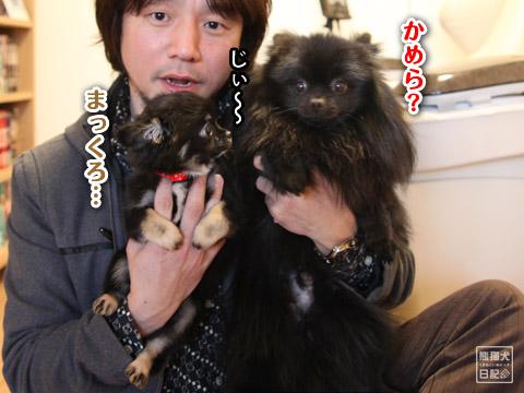 20120420_菩提と真熊5