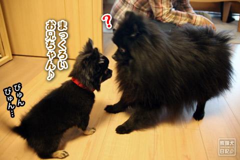 20120420_菩提と真熊11
