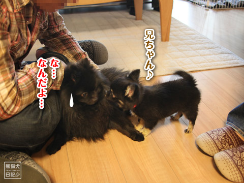 20120420_菩提と真熊12