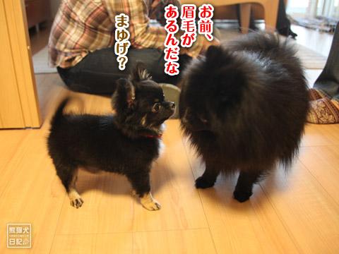 20120420_菩提と真熊8