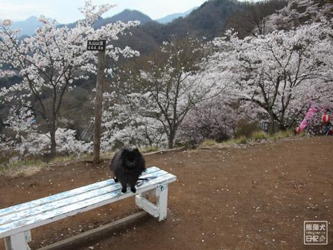 20120423_お花見4