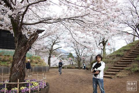 20120423_お花見5