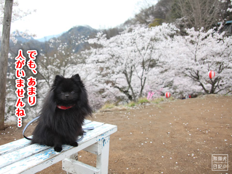 20120423_お花見9