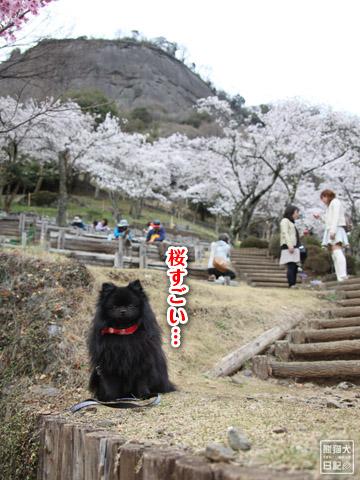 20120423_お花見8