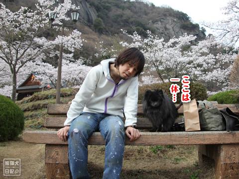 20120424_大月お花見5