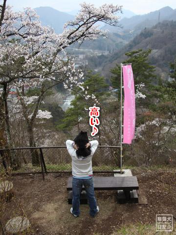 20120424_大月お花見10