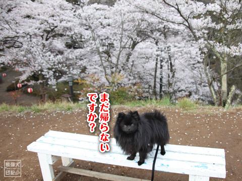 20120425_お花見2