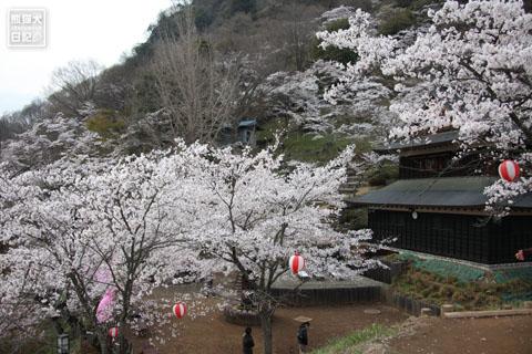20120425_お花見6