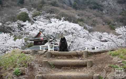 20120425_お花見1