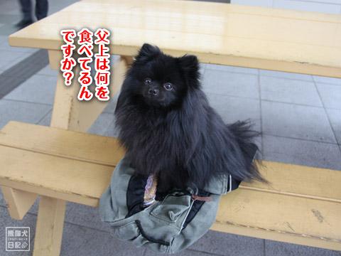 20120425_お花見8